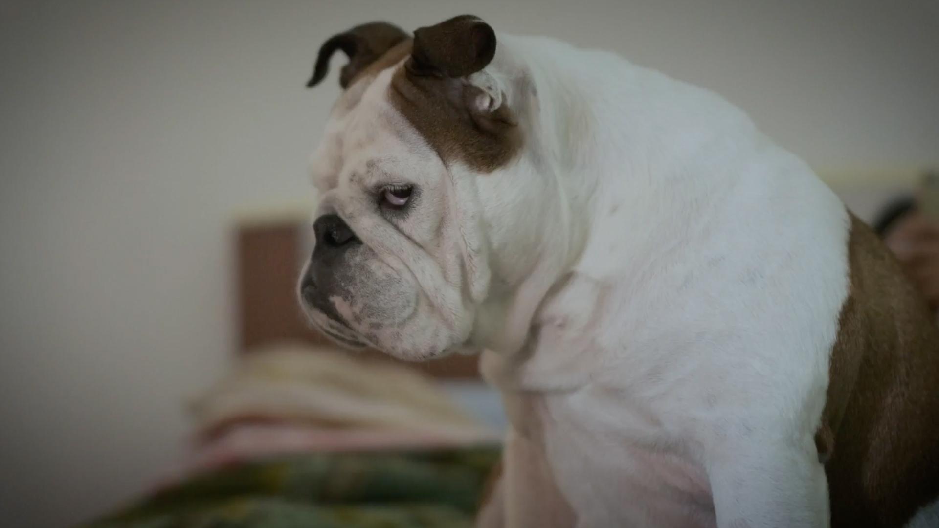 #eroia4zampe - campagna social dedicata ai nostri animali domestici